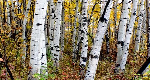 Autumn Calgary Alberta (8)