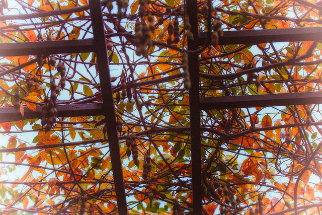 The Arbor above My Head