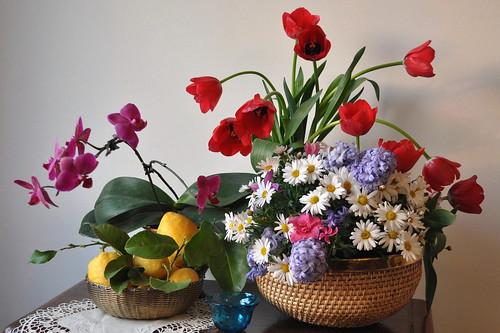 Ecco la Primavera !!! by Melisenda2010