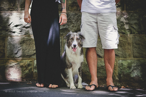 Artex and his parents. twoguineapigs pet photography, border collie, dog portraiture. A story about Artex.
