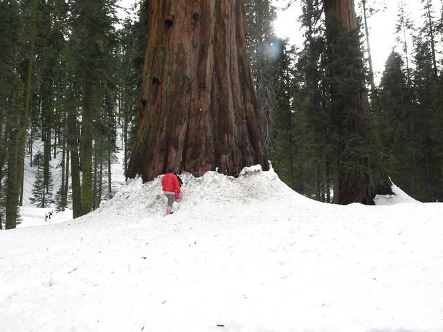 Sequoia National Park 168