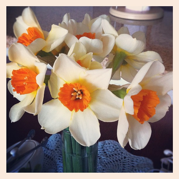 Daffodils for the table. Bringing spring indoors.