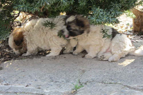 Cute puppies relaxing in the shade