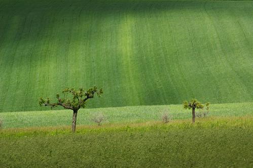verde photo foto natura terre piante gianni maggio lu 2012 alessandria quadri monferrato campi contadini armano