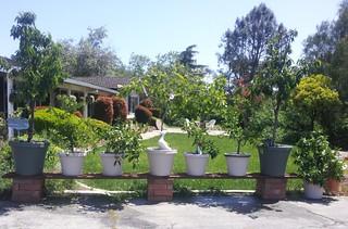 My Whimsical Green Garden Is Flourishing 2