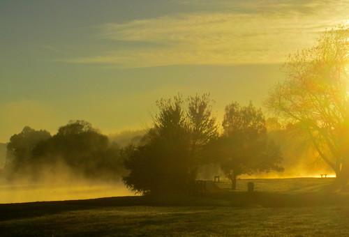 trees sun mist lake sunrise