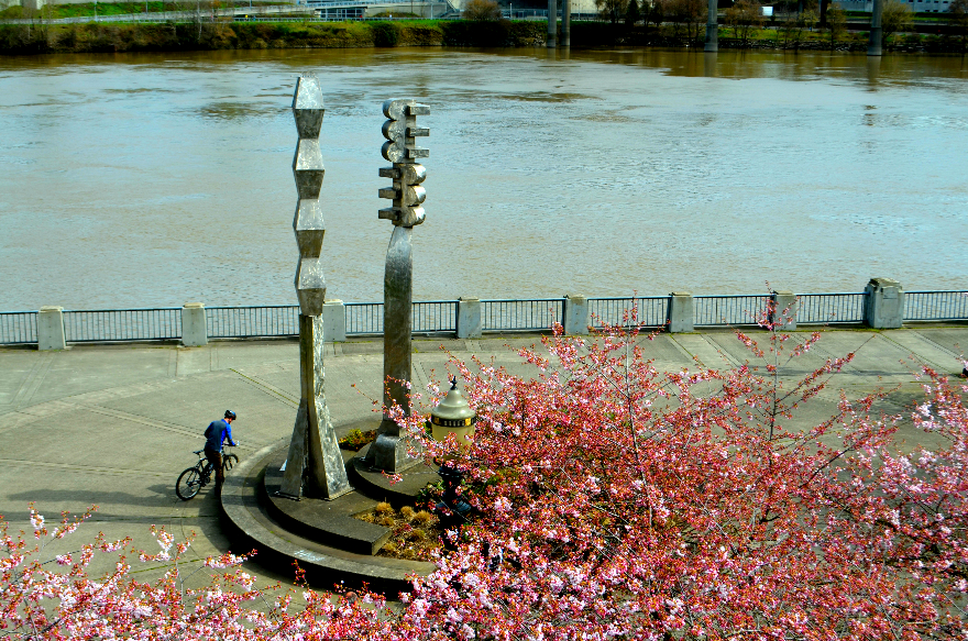 friendship_circle_cherry_blossoms_IPY