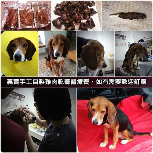 「義賣」台北從宜蘭收容所救出眼睛受傷的米格魯吉米,義賣手工自製雞肉乾籌醫療費,如有需要歡迎訂購,也歡迎領養,20120418