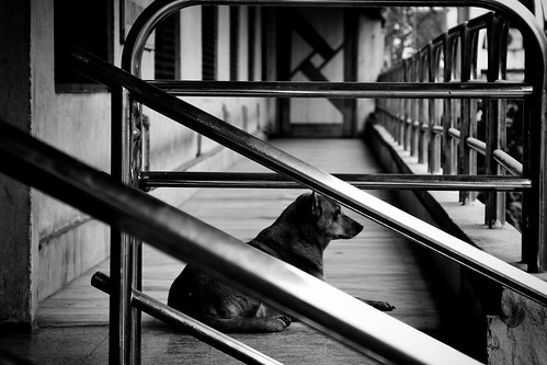 Dog and Lines [EXPLORED]