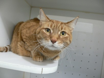 Pet of the week: Cid - A512301 by City of Calgary