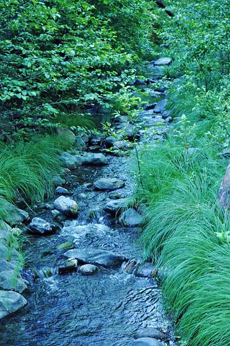 Creek behind Kenwood Cottage