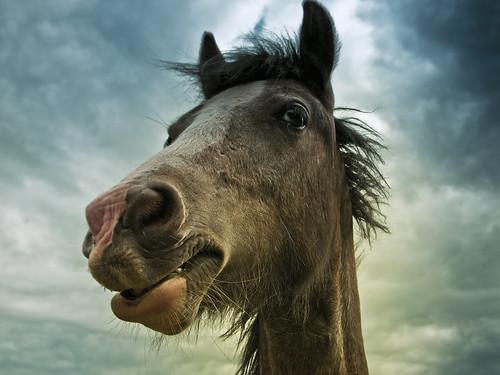 無料写真素材, 動物 , 馬・ウマ