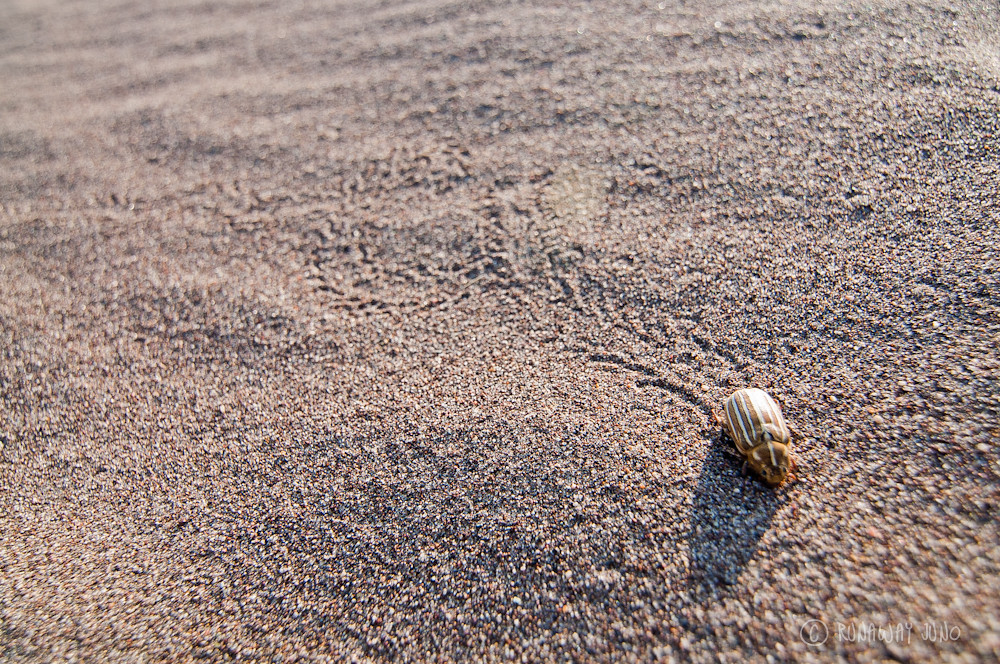 Insect lives at the Great Sand Dunes and his track