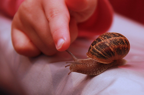 Nora and the Snail