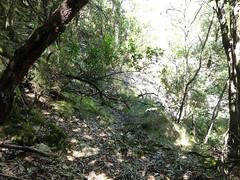 Le vieux sentier en RD en amont de la brèche du Carciara : suite du sentier au-dessus de la vasque