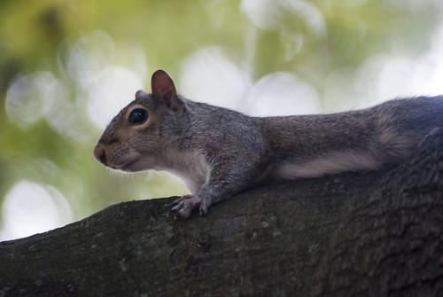 Squirrel2012071566d