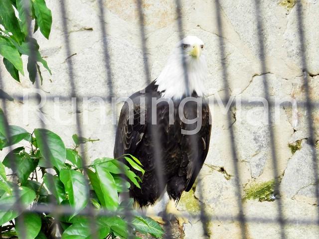 Jurong Bird Park 06