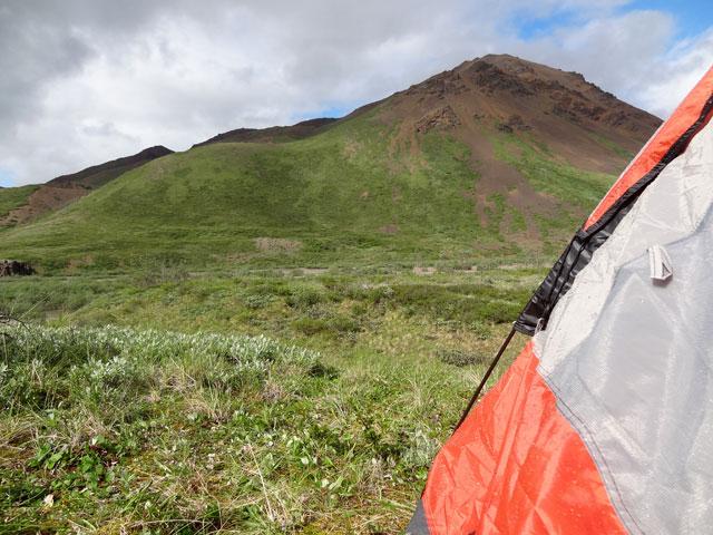 tent-crop