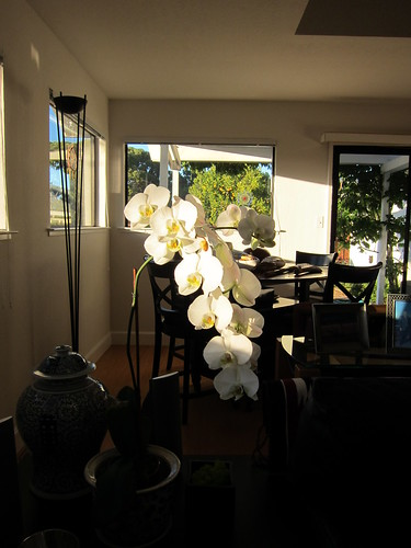 orchids IMG_0954