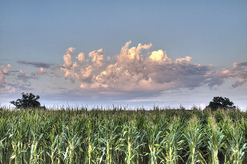 Clouds over corn