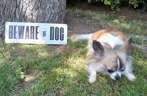 Beware of Dog by SJB Dolls