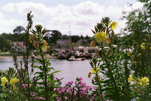 Yellow and pink flowers with river behind them