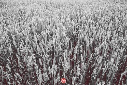 world camera oneaday canon project finland photography design blog helsinki photographer year capital gear photoaday jussi 2012 tmi pictureaday lightroom valokuvaaja project365 365days valokuvaus hellsten flickr365 tumblr jussihellsten 3652012 g1x wdchelsinki2012 helsinki365