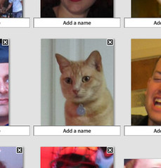 picasa now apparently detects cat faces