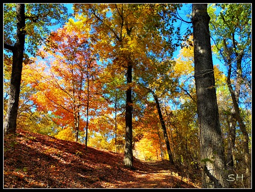 fall leaves forest mississippi woods thegalaxy intouchwithnature fantasticnature absolutelyperrrfect