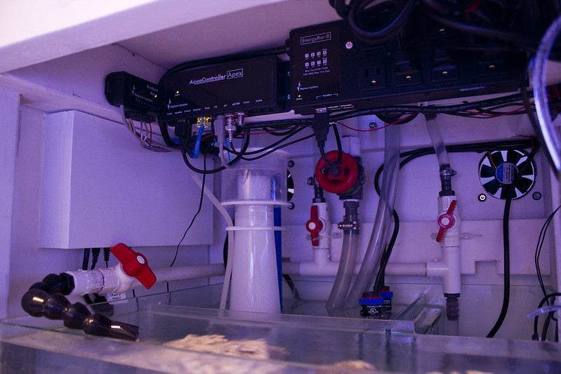 Thedoogan S Shallow Rimless Tank Page 9 Reef Central