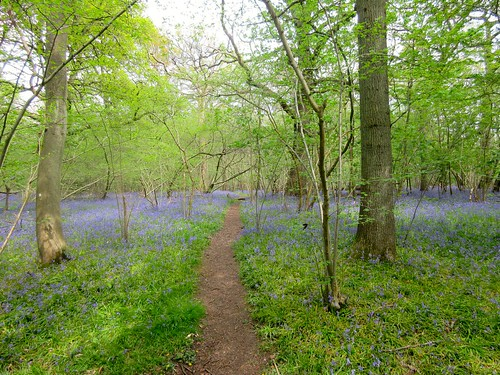 Wanborough to Godalming Dayhike