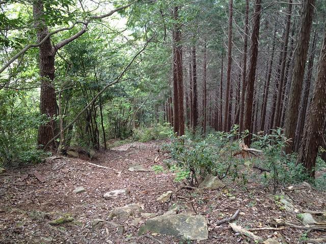 相戸岳 東ルート 森の境界