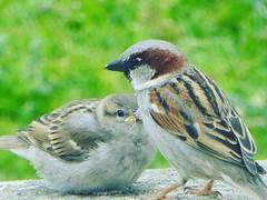 Dad parenting skills .... #birdsofinstagram