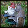 Gray Squirrel and the Garden Gnome by --Anne--