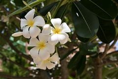 Flowers Bush Gardens,Tampa FL.