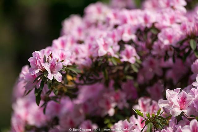 春臨花開時