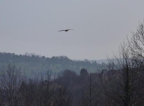 Hughenden Park March 2012