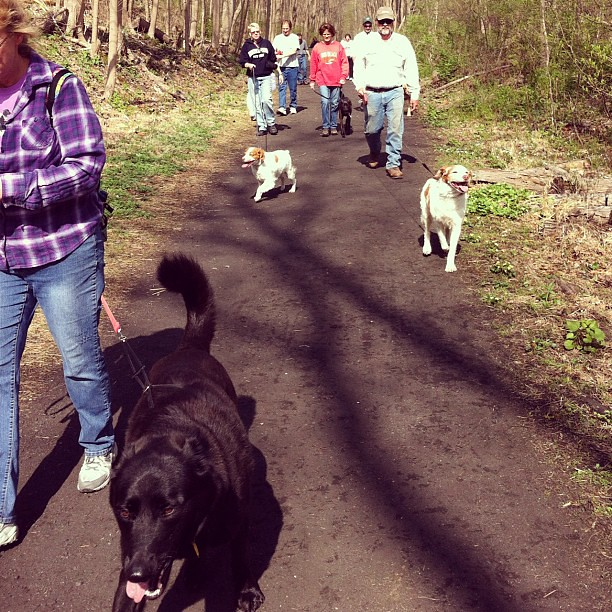 Sunday is dog walk group day