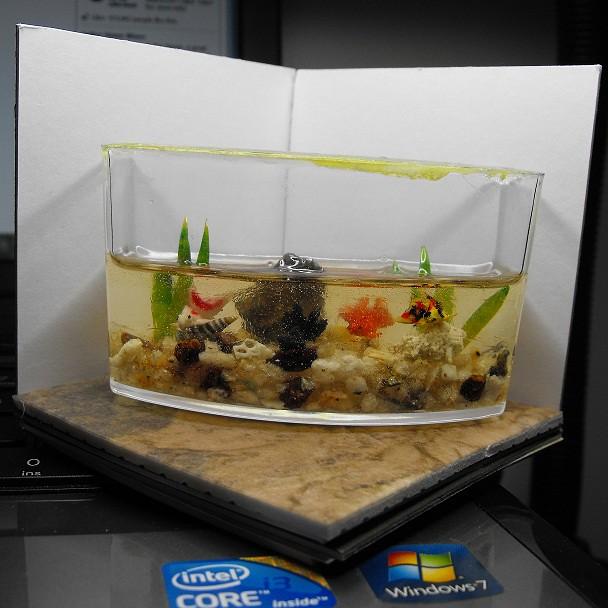 Fish tank fail flickr photo sharing for Fish tank camera