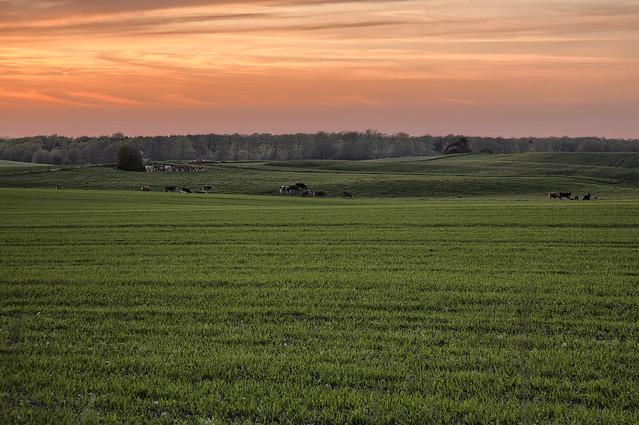 Næstelsø Sunset
