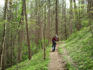 Great Smoky Mountain Trails, Spring