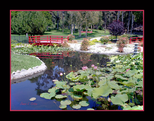 Lotus Pond at Kenneth Hahn State Recreation Area