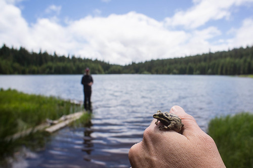 Frog at Timothy Lake