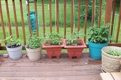 Plants_52612b