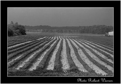 film field 35mm minolta quebec kodak trix 11 d76 champ argentique xg1 vaudreuil