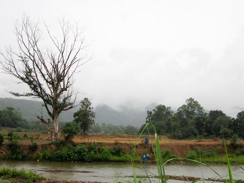 Rainy walk-6