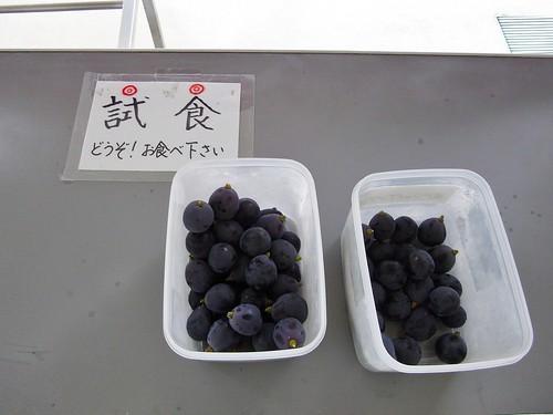 葡萄試食!