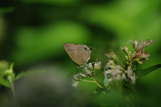 清華蝴蝶園