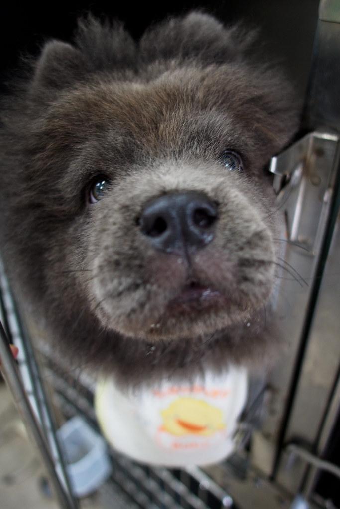 哇!籠子裡有熊!