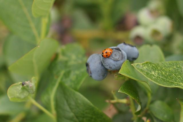 Ladybug friend